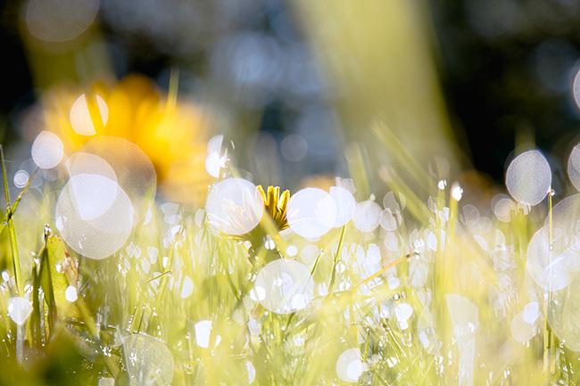 Hyvää kesää! - kuva: Joonas Mäkivirta