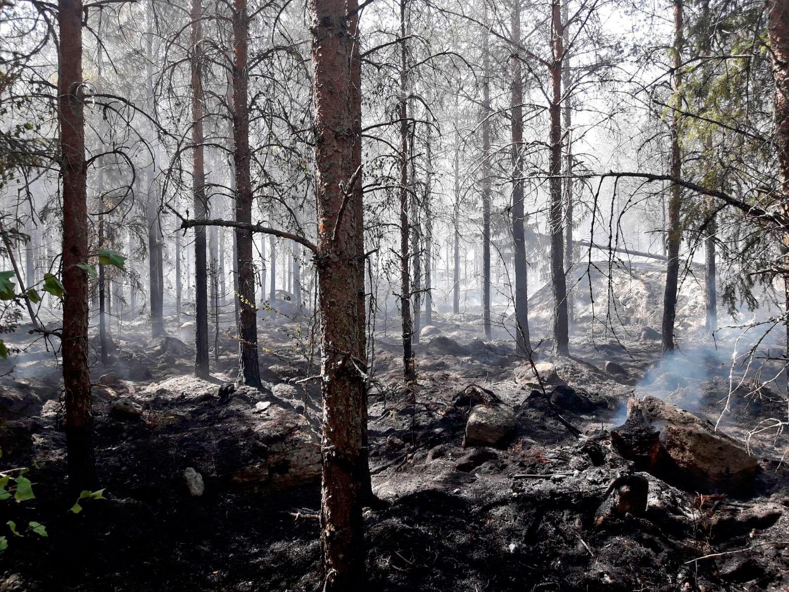 Kuvassa on palanutta metsää.